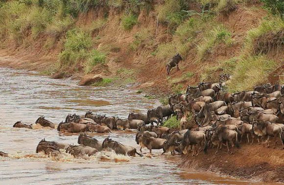 3 Days Masai Mara Migration Safaris