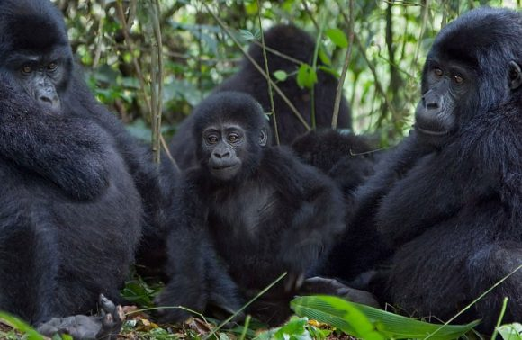 5 Days Queen Elizabeth & Bwindi Impenetrable Safari