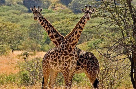 6 Days Kidepo Valley & Pian Upe Safari