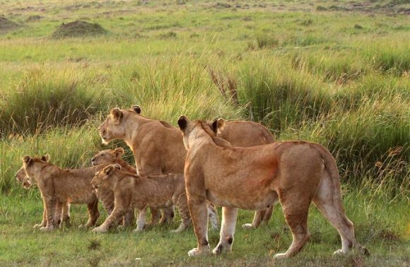 3 Days Low Season Masai Mara Group joining  Package