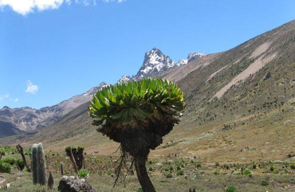 5 Days Mt Kenya Climbing: Naromoru – Chogoria Route