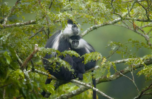 6 Days, 5 Nights Rwanda Primate Adventure