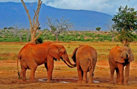 4 Days Amboseli, Tsavo West & East Safari Adventure