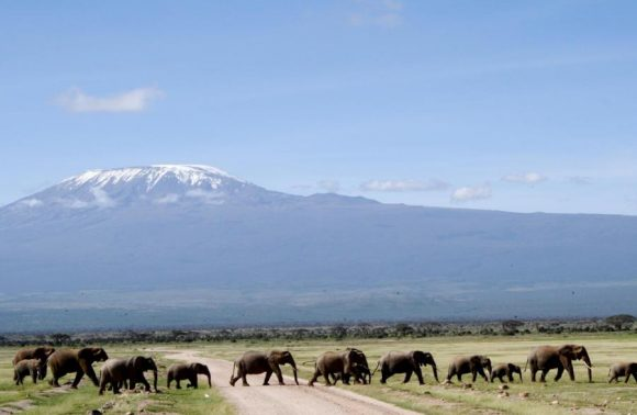 3 Days Amboseli July/August Safari Packages