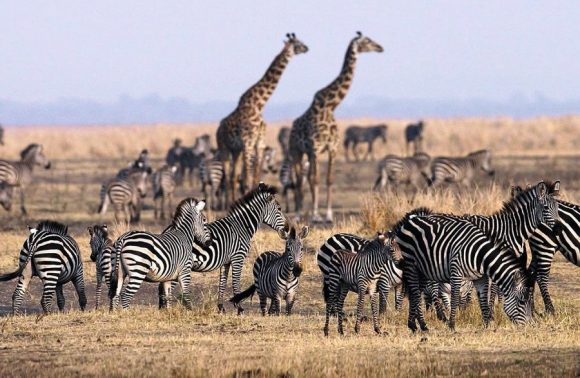 6 Days Lake Manyara, Ngorongoro, Serengeti & Tarangire Safari