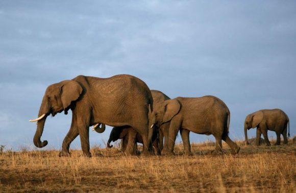 6 days Amboseli, Tsavo West & East Safari