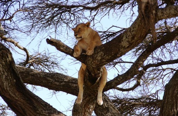 14 Days Kenya & Tanzania Combined lodge Safari