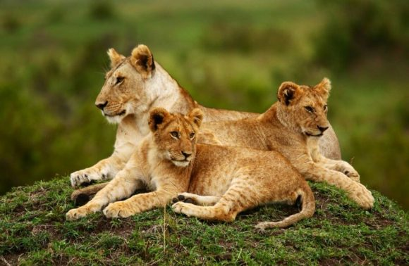 3 Days Masai Mara July/August Safaris