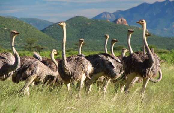 4 Days, 3 Nights Aberdare & Samburu Safari Package