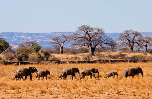 5 Days Lake Manyara, Ngorongoro Crater & Tarangire Safari