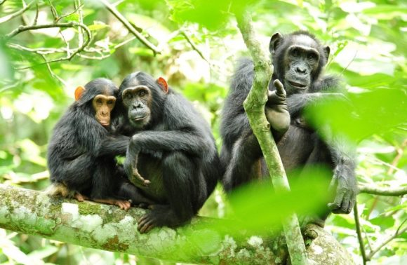 5 Days Kibale Forest and Murchison Falls National Park