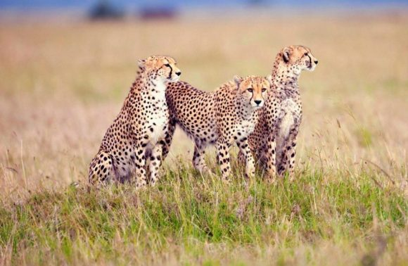 8 Days Tarangire, Lake Eyasi, Serengeti, Ngorongoro, Lake Natron, Oldoinyo Lengai & Manyara | Luxury Safari