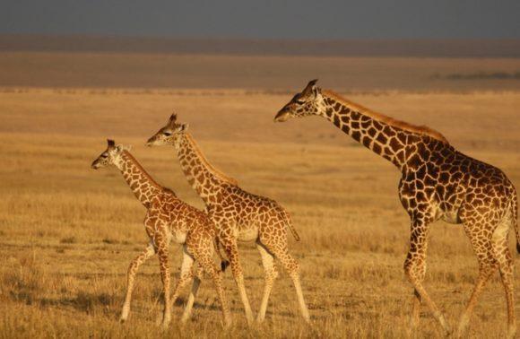 3 Days Christmas Mara Safari Group Departure Packages