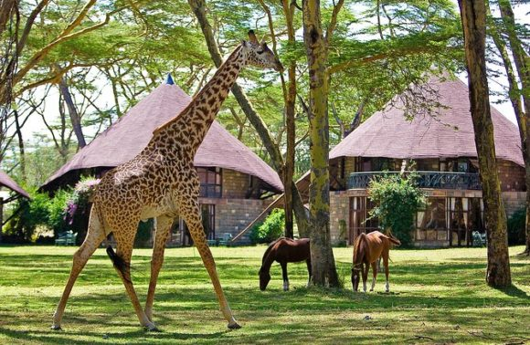 Naivasha,Nakuru ,Nanyuki and Mt Kenya Pre Christmas self drive package
