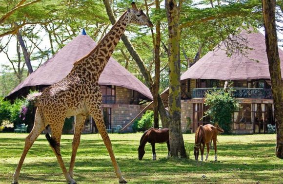 Naivasha, Elementaita, Nakuru & Mt Kenya July/August Getaways