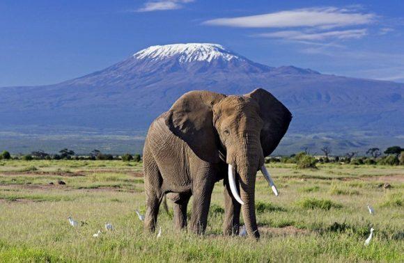3 Days Amboseli Madaraka Safari Packages