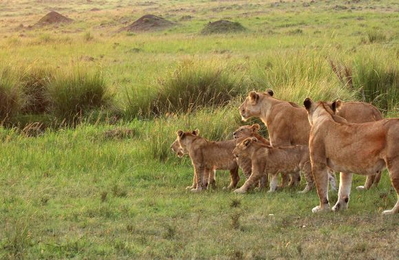 3 Days Masai Mara Madaraka Packages