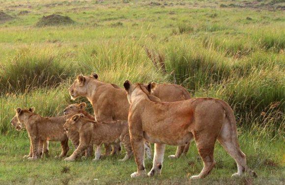 3 Days Low Season Masai Mara Group joining  Package