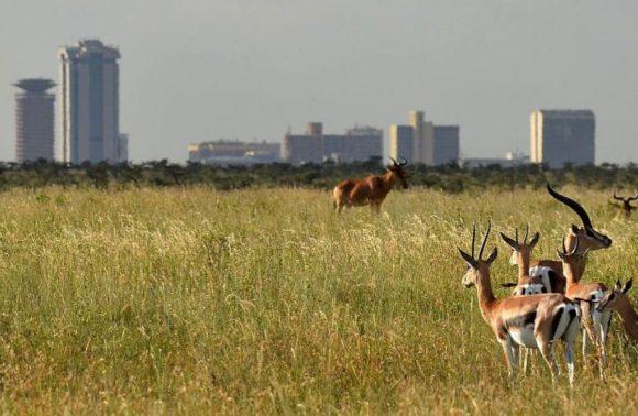Nairobi National Park, Karen Blixen & Mamba Village Excursion