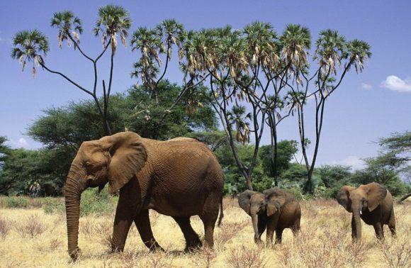 3 Days Samburu Easter Safari Package