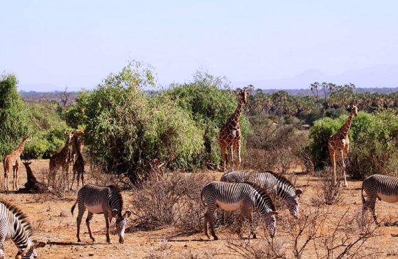 5 Days Aberdares, Samburu, Lake Nakuru & Masai Mara Safari