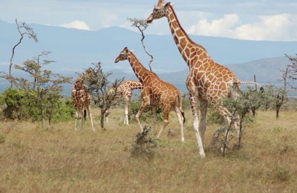 3 Days Samburu Madaraka Safari Packages