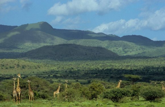 3 Days Tsavo West & East Easter Safari Packages