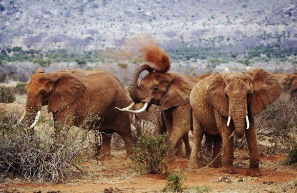 3 Days Tsavo East & West Madaraka Safari Packages