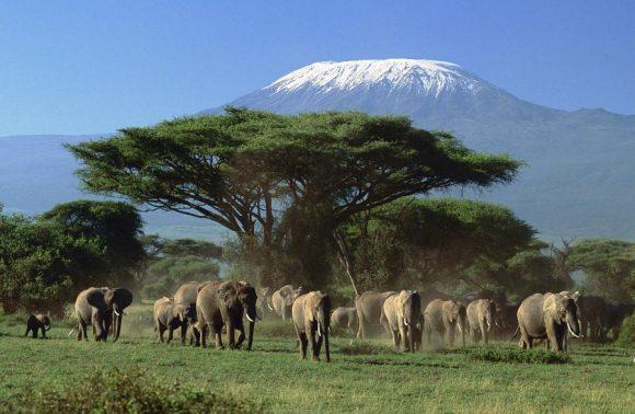 5 Days Masai Mara, Lake Nakuru & Amboseli Safari