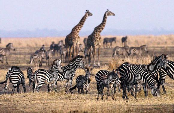 6 Days Lake Manyara, Ngorongoro, Serengeti & Tarangire Safari