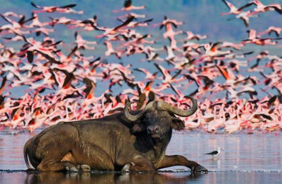 Lake Nakuru National Park Day Trip
