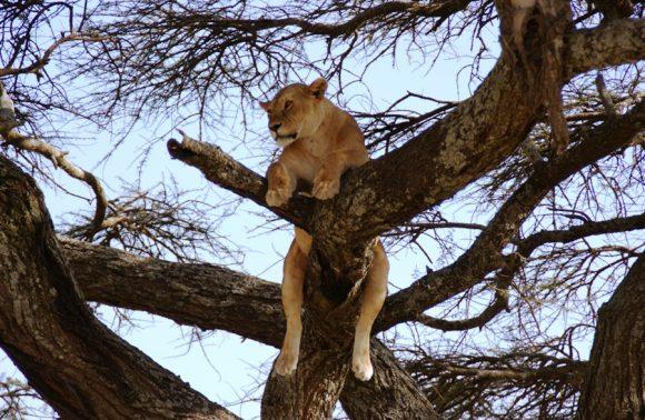 4 Days Lake Manyara, Ngorongoro & Tarangire Safari