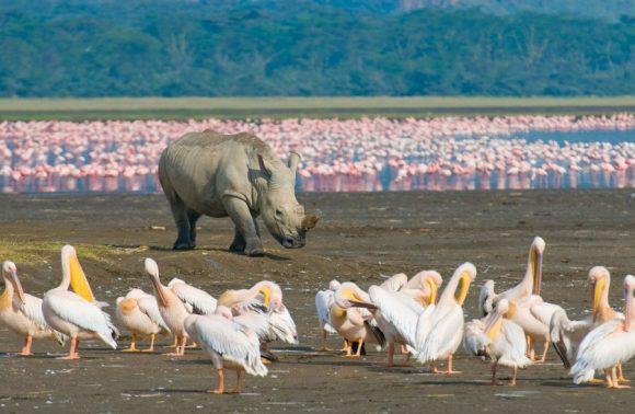 6 Day Masai Mara, Lake Nakuru & Samburu Safari