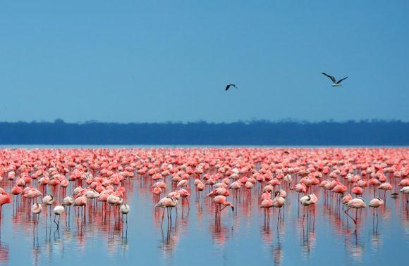 4 Days Masai Mara & Lake Nakuru Safari Package