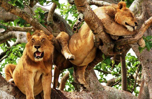 6 Days Queen Elizabeth, Bwindi & Lake Bunyonyi Safari