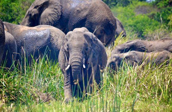 9 Days Gorilla & Wildlife Rwanda Safari