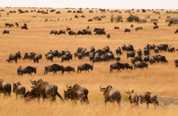 10 Days Lake Nakuru, Masai Mara,  Serengeti  & Ngorongoro Safari