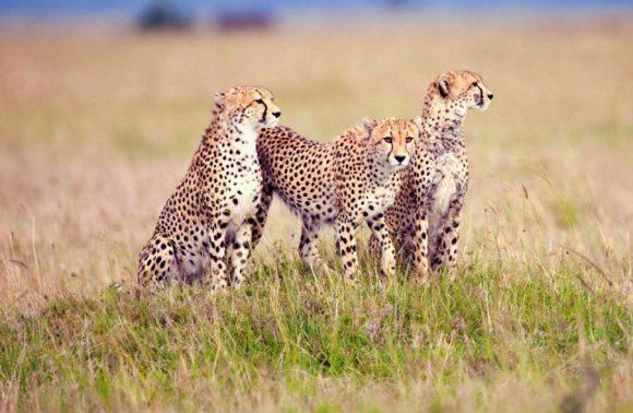8 Days Tarangire, Lake Eyasi, Serengeti, Ngorongoro, Lake Natron, Oldoinyo Lengai & Manyara | Luxury Safari